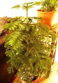 árbol de vavidad para todo el año 2