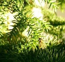 árbol de vavidad para todo el año 3