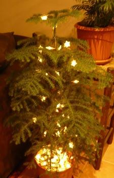 árbol de vavidad para todo el año 4