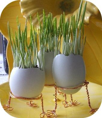 cáscaras de huevo a modo de macetas 1