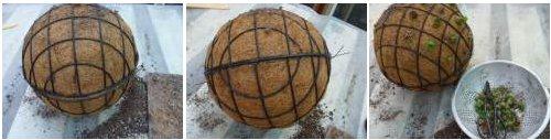 Suculentas en esferas 3