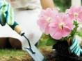 imagen Cómo tener un buen jardín en nuestro hogar