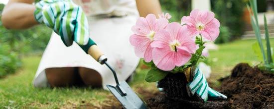 Aprende a tener un buen jardín