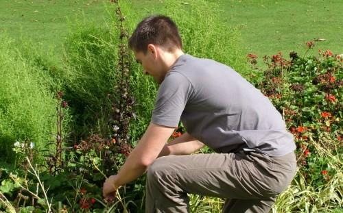 El clima y el jardín