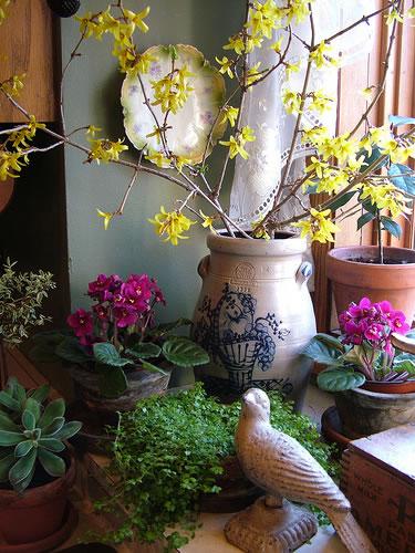 Floración invernal de ramas 1