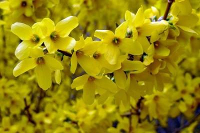 Floración invernal de ramas 2