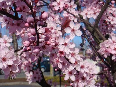 Floración invernal de ramas 3