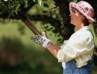 imagen La poda de los árboles frutales