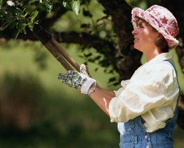 Poda de los rboles frutales for Cuando se podan los arboles frutales