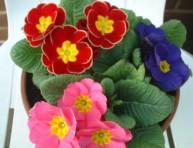 imagen Las plantas anuales