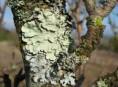 imagen Musgos y líquenes ¿amenaza para los árboles?