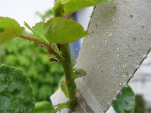 Protección biológica del jardín4