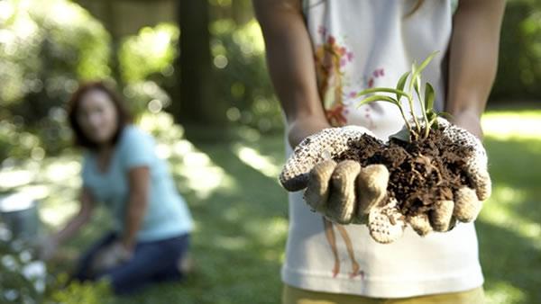 Semillas para los tipos de siembra