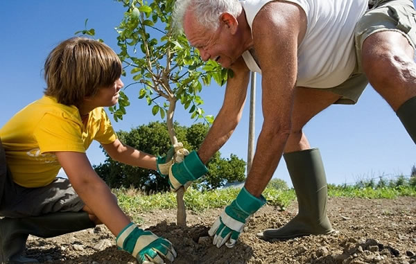 Trasplante de árboles