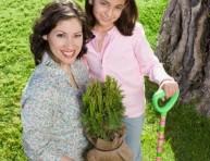 imagen Arbustos: plantación en tierra
