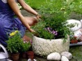 imagen Arbustos: plantación en macetas