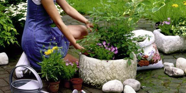 Arbustos plantaci n en macetas for Arbustos para macetas exterior