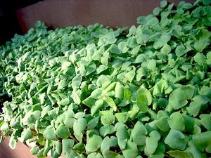 verdura fresca todo el año1