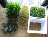 imagen Brotes tiernos: verdura fresca todo el año