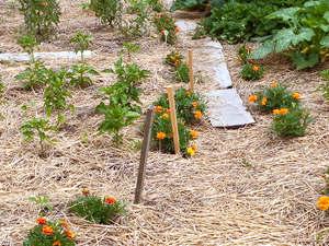 Caminos y senderos en el jardín3