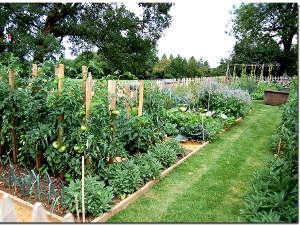 Caminos y senderos en el jardín4