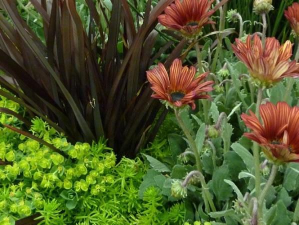 Aumentar los conocimientos de jardinería 2