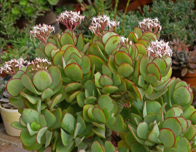 Plantas de interior guia de jardineria jardines y for Jardineria y plantas