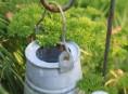 imagen Decorar el jardín con viejas regaderas