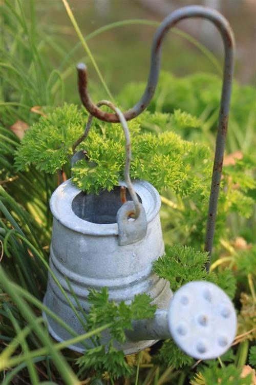 Decorar el jard n con viejas regaderas - Decorar el jardin ...