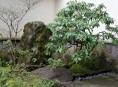 imagen Diseño de jardínes: lecciones desde Japón