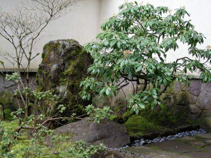 Lecciones japonesas para diseñar jardines 1