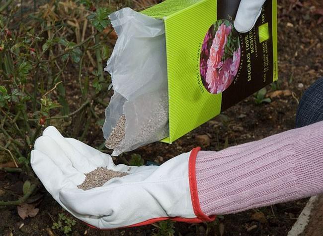 La fertilización de invierno de los rosales1