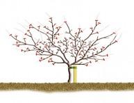 imagen La poda de invierno de manzanos y perales