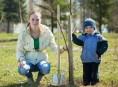 imagen Los árboles en nuestro jardín
