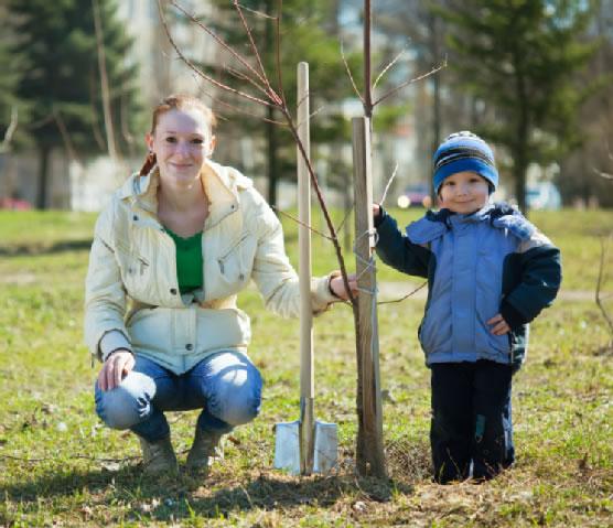 Cultivo de árboles
