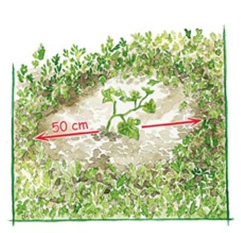 Abono verde para la tierra 2
