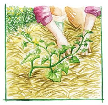 Abono verde para la tierra 3