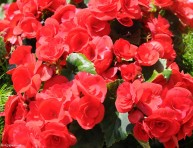 imagen Composición floral de tonos primaverales