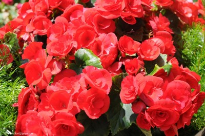 Composición floral de primavera