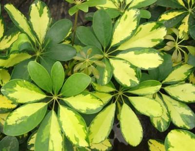 Crea una bonita composición de follaje amarillo