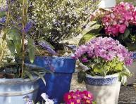 imagen Prepara tus plantas para las vacaciones