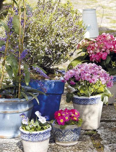 Prepara tus plantas para las vacaciones