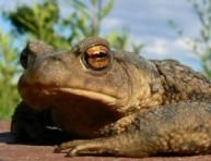 imagen Atraer ranas y sapos a nuestro jardín