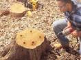 imagen Cómo eliminar el tocón de un árbol sin esfuerzo