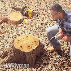 Eliminar el tocón de un árbol 1