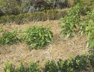 imagen Cuidados del huerto en regiones secas