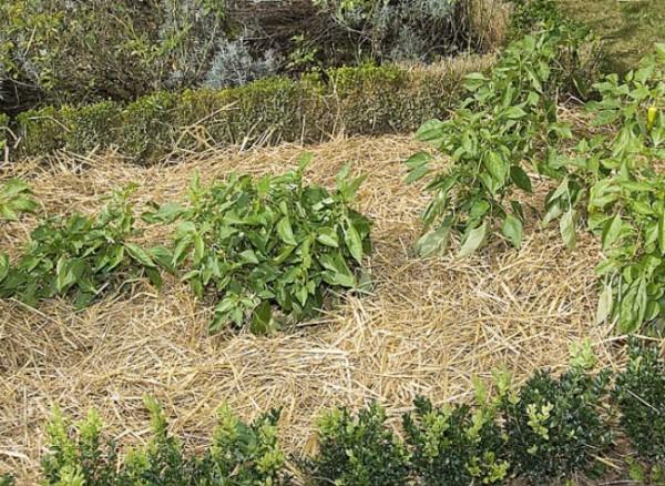 Cuidado de huerto en zonas secas 1