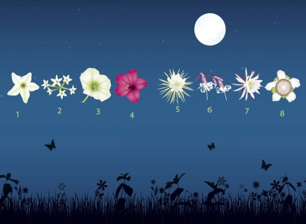 Flores nocturnas 01