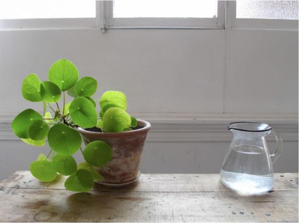 Plantas de interior para departamentos 2