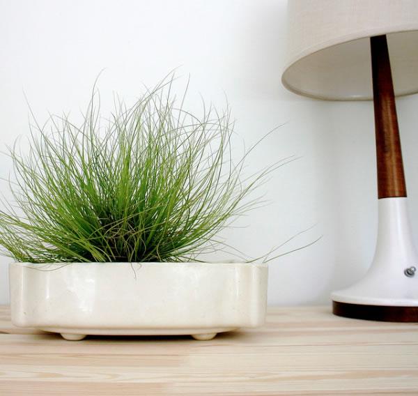 Plantas de interior para departamentos 4